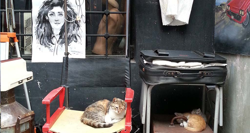 Streetcats of Istanbul